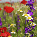 Colorful Wild Flowers Nature Spring Scene by Goce Risteski