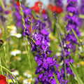 Colorful Wild Flowers Spring Scene by Goce Risteski