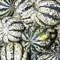 Colorful Winter Acorn Squash On Display by John Trax
