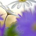 Colorfull Spring by Teuni Stevense