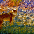 Colorized Death Valley Coyote by Blake Richards