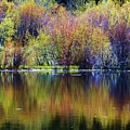 Colors Of Autumn In May by Russell  Barton