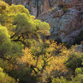 Colors Of Autumn In The Sonoran  by Saija Lehtonen