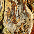 Colors Of Bark by Debbie Oppermann