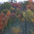 Color's Of Fall by Kevin Dunham