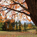 Colors Of Fall by Lois Lepisto