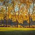 Colors Of Fall by Mauricio Ricaldi