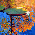 Colors Of Fall On The Lily Pond by John Lautermilch