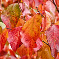 Colors Of Fall by Terry Anderson