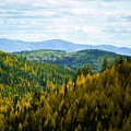 Colors Of Sherman's Pass by Troy Stapek