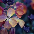 Colors Of Spring by Eva Lechner