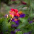 Colors Of Spring by Lori Tambakis