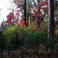Colors Of The Forest by Glenn Smith