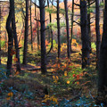 Colors Of The Forest by Lori Deiter