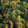 Colors Of The Smokies by Michael Eingle