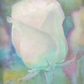 Colors Of This Rose by Hal Halli