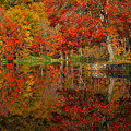Colors Reflect by Karol Livote