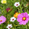 Colourful Flowers by Arterra Picture Library