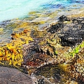 Colourful Sea Life - Fishers Point by Lexa Harpell