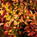 Colours Of Autumn  by Maria Mizzi