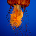 Colours Of The Jelly Fish by Naman Imagery