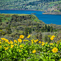 Columbia River Gorge by Patricia Babbitt