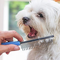 Combing Beards Of The White Dog by Jaroslav Frank