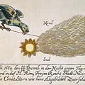 Comet, 1664 by Granger
