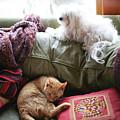 Comfy Bella And Cat by Liz Santie