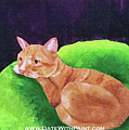 Comfy Kitty_dwp_may 2017 by Ania M Milo