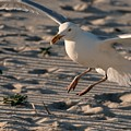 Coming In For A Landing - Jersey Shore by Angie Tirado