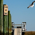 Coming In For The Landing by J M Farris Photography