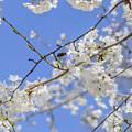 Coming Of Spring by Elvis Vaughn