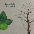 Common Apple Tree Id by Michael Panno