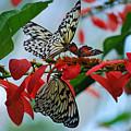 Community Flowers by Teresa Blanton