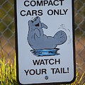 Compact Cars Only Sign by Carol Groenen