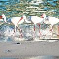 Companions On Coquina Beach by Teresa Hughes
