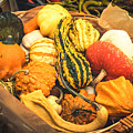 Composition Of Various Gourds In A Basket With Vignetting by Luca Lorenzelli