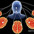 Conceptual Image Of Multi-brain by Stocktrek Images