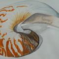 Conch by Audrey Bunchkowski