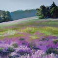 Concord Loosestrife by Jeanne Rosier Smith