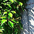 Concrete Green by Tinto Designs