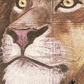 Concrete Lion by George I Perez