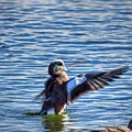 Conduckting by Rrrose Pix