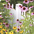 Cone Flowers And Fence by James Baron