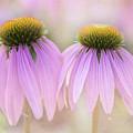 Cone Flowers by Jeff Klingler
