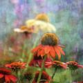 Coneflower Garden 2789 Idp_2 by Steven Ward