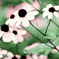 Coneflowers No. 8-2 by Sandy Taylor