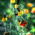 Coneflowers by Saija  Lehtonen