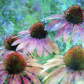 Coneflowers Twirling In Lavender 1666 Idp_2 by Steven Ward